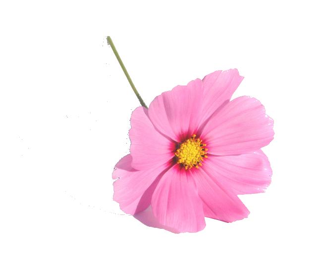 entrez dans notre boutique parfume et fleurie situe la palme et dcouvrez comment bnficier au meilleur cot dun service fleuriste professionnel de - Cout Fleuriste Mariage